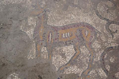 Cattedrale-S.Maria-Mosaico-cervi.17